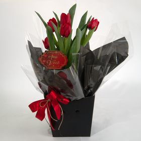 Tulipa planta