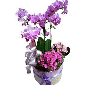 Box Orquídea e Flores da Fortuna