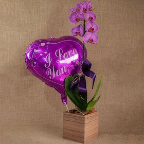 Orquídea com balão metalizado