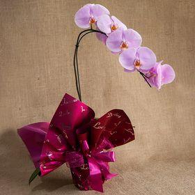 Orquídea pendente Lilás