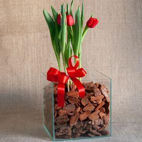 Tulipa no vidro