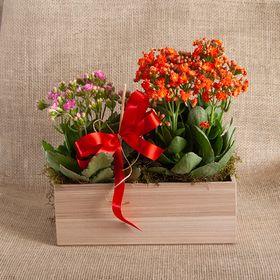 Floreira de kalanchoe