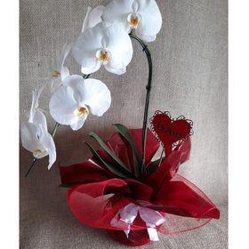 Orquídea pendente Branca