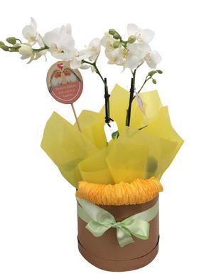Midi Orquídea com Pic💓