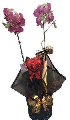 Orquídea com Balão Metalizado.