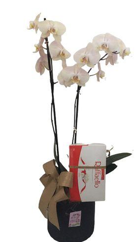 Orquídea com Raffaello