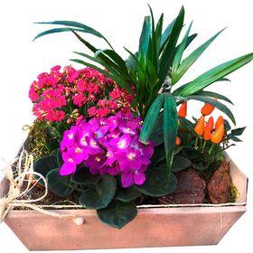 Mini jardim - cores variadas *