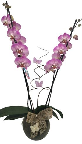 thumb-orquidea-borboleta-em-vidro-0