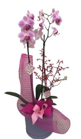 Orquídea decorada em Caixa Lilás
