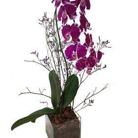 Orquídea Roxa em vaso de vidro
