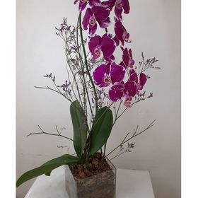 thumb-orquidea-roxa-em-vaso-de-vidro-0