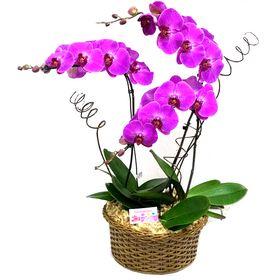 3 Orquídeas Cascata