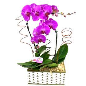 Orquídeas Cascatas na Cesta