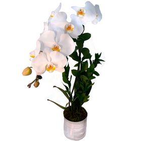 Orquídea Branca 02 Hastes
