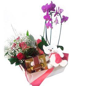 Cesta com Orquídea, Pelúcia, Rosas e chocolate