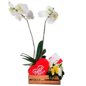 Caixa c/ Orquídea  dia das Mães