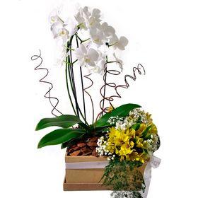 Orquídea Com Arranjo De Astromelias