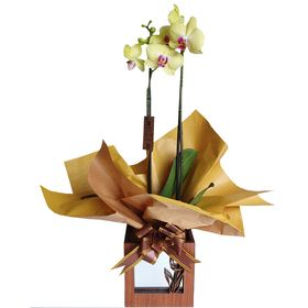 Orquídea em cachepot