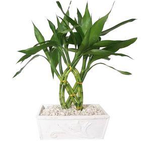 thumb-bambu-da-sorte-vaso-retangular-0
