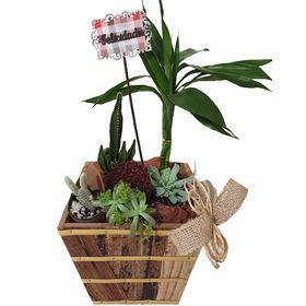 Arranjo com Bambu, Cactos e Suculentas