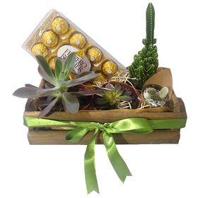 Caixa com Suculentas, Cactos e Chocolate