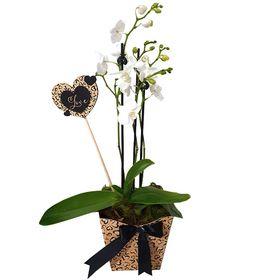 """Mini Orquidea branca """"Love"""""""