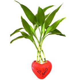 Bambu da Sorte Coração