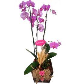 Orquídea + Cacto em Cachepo rústico