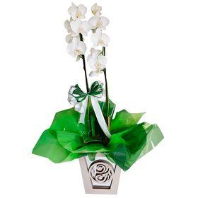 Orquídea Branca Cachepo especial