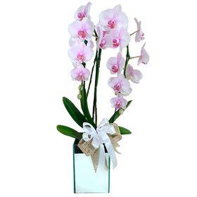 Orquídea em vaso espelhado