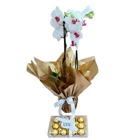 Orquídea  Branca com Ferrero Rocher