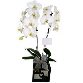 Orquídea branca em cachepot
