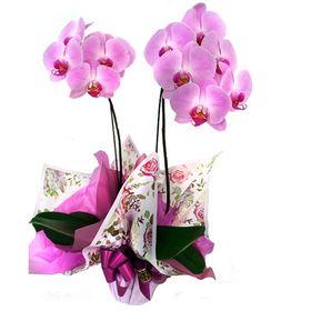 Orquídea Lilás 2 Hastes
