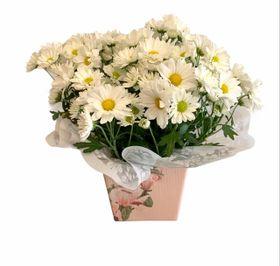Vaso de Mini Margarida Plantado para Presente