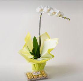Orquídea Branca e Chocolate de 12