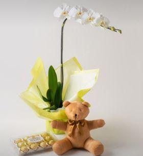 Orquídea Branca Laços e Fitas, Urso e Chocolate de 12