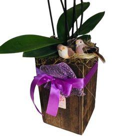 thumb-orquideas-em-tubo-de-madeira-beleza-natural-0