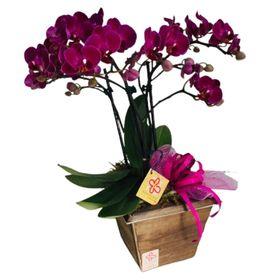 orquideas em cachepot de madeira