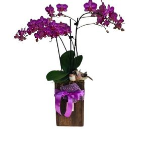 thumb-orquideas-em-tubo-de-madeira-beleza-natural-2