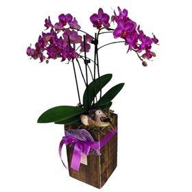 thumb-orquideas-em-tubo-de-madeira-beleza-natural-3
