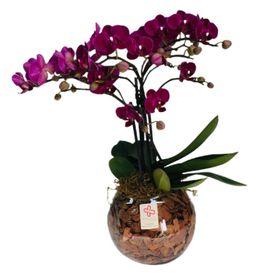 orquídea em cachepô de vidro