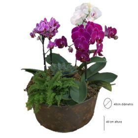 ESGOTADO Trio de orquídeas