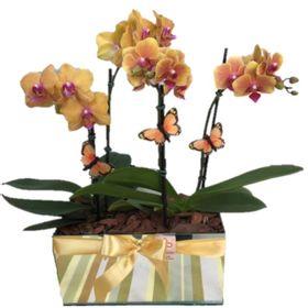Orquideas em cachepo de espelho