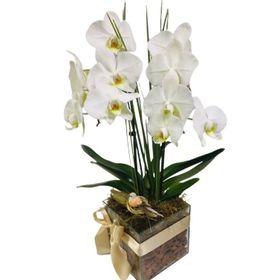 Orquídeas em cachepo de vidro