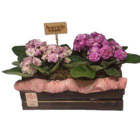 violetas na mini floreira