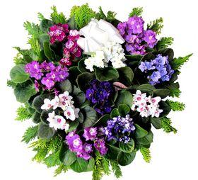 Arranjos com violetas