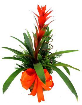 Vaso de Bromélia Vermelha