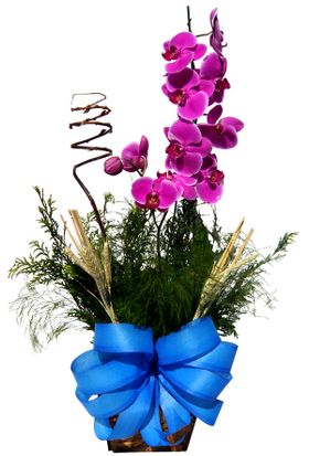 thumb-vaso-de-orquidea-lilas-0