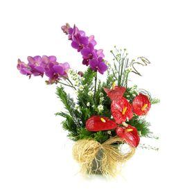Linda manhã com flores