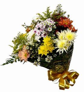 Lindo Buquet de flores manhã de sol